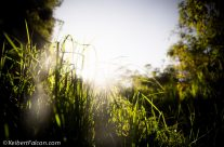 Una tarde en la naturaleza