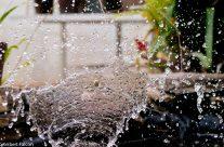 Fotografía de Alta Velocidad – Agua o Hielo??